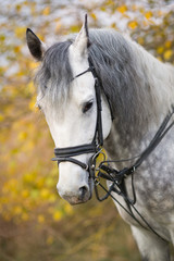 Horse on a walk in the autumn
