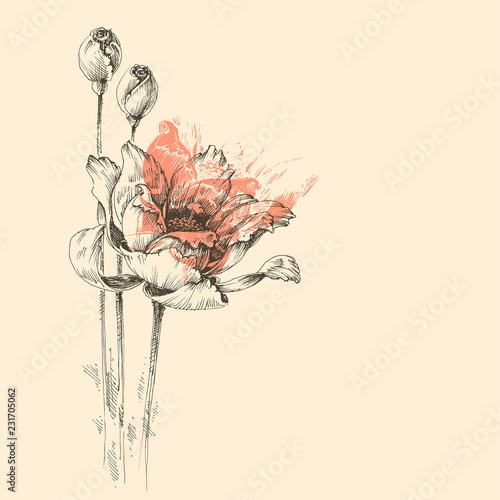 Roses vector sketch, beautiful artistic greeting card © Danussa