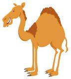dromedary camel cartoon animal character - 231713295