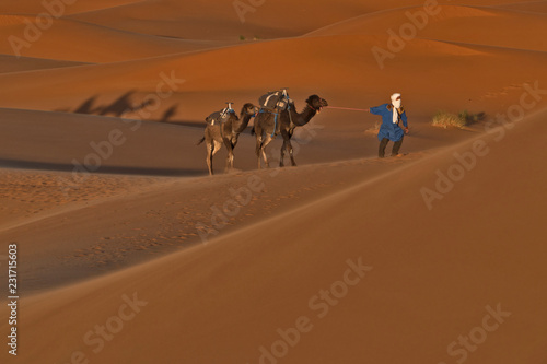 A Berber with two camels at Erg Chebbi, Merzouga, Morocco - 231715603