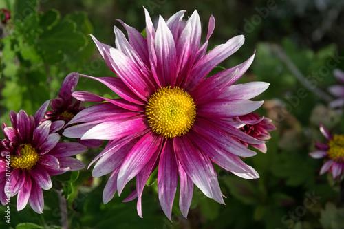 flower - 231724603