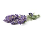 Lavender flowers © Scisetti Alfio
