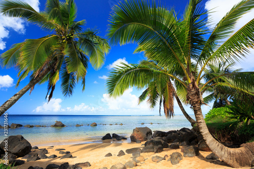 Palm trees in Kauai Hawaii in the morning