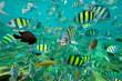 Leinwandbild Motiv Tropical Fish