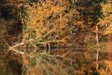 Baum spiegelt sich im  Wasser - 231738861
