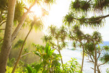 Na Pali Coast hiking trail , Kauai island,  Hawaii