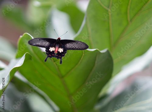 Butterflies in Prague - 231747628