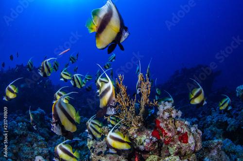 Leinwandbild Motiv Fische
