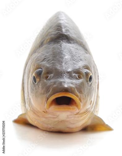 Obraz na płótnie Big fresh carp.