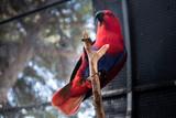 Le charme du perroquet - 231752057