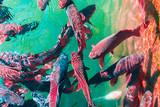 In the ocean, fish swim - 231753244