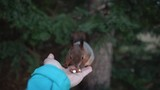 Squirrel jumps on palm and eats peanuts - 231758631
