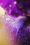 Abstract macro purple flower on black background - 231761283