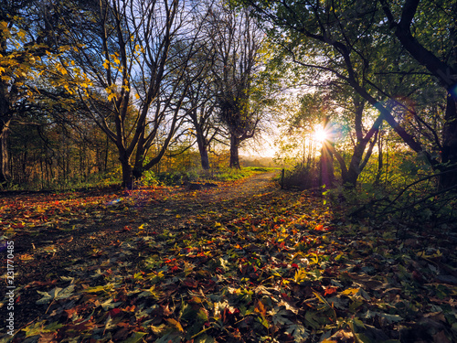Foto Murales  wide angle shoot Autumn forest morning,Northern Ireland