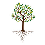 Color Tree and Roots. Vector Illustration. - 231785826