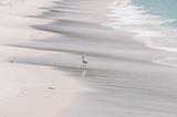 Close up of seagull bird on white sand beach