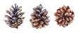 Leinwandbild Motiv Collection of realistic watercolor illustrations of the pine cones on white background.