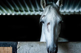 Horse Looking - 231788435