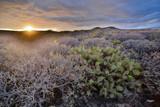 Dry Desert Landscape - 231801839