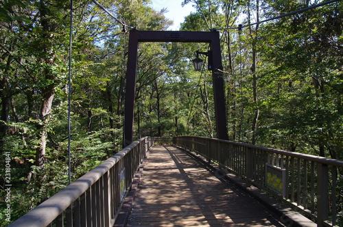 森の中の吊り橋