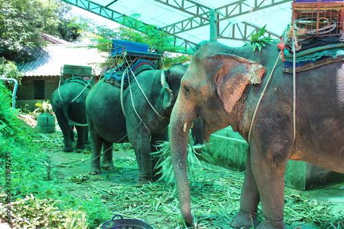 Wall mural Thailand Elephant