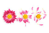 pulling off petals
