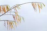 Willow branches with colorful leaves