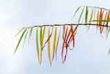 Willow branches with colorful leaves - 231862813