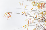 Willow with colorful leaves over white - 231862831