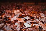 Fallen red leaves lay on ground in dark park - 231862858