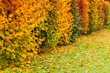 Decorative bushes with colorful leaves - 231862892