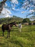 fazenda cavalos  - 231882441