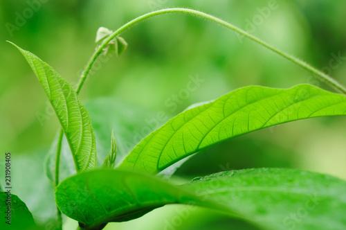 Leinwandbild Motiv Fresh green tree leaves, frame. Natural background, Fres
