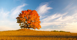 lonely tree in the field in fiery autumn colors - 231911224