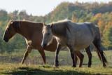horses on the autumn graze - 231911283