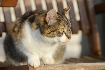 cat sitting on wooden garden chair and looking