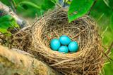 Robins eggs - 231922007