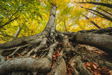 Wurzel und Baum - 231924859