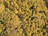 Aerial view at the road in autumn forest - 231925407