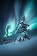 Pine tree & northern lights, Canada