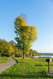 Distinctive Autumn Tree 4 - 231929465