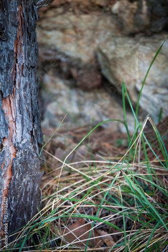 Leinwanddruck Bild Weinvisionen, Detail einer Baumwurzel, daneben ein Grasbüschel
