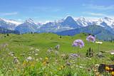alpen: eiger, berner oberland, schweiz