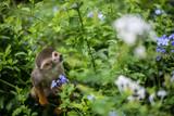 Singe-écureuils - 231954425