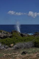 Geyser d'eau au trou du souffleur, Guadeloupe