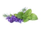 Rosmarin, Lavendel und Zitronenmelisse -  Freisteller - 231980831