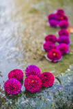 Fleurs éponges violettes - 231987672