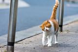 街猫 野良猫 - 231988874