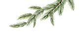 Watercolor vector green spruce branch, Christmas tree. - 232035025