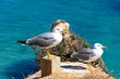 Two seagulls on the cliffs with the ocean to the rear, Praia da Rocha, Portimao, Portugal.